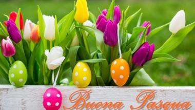 Buona Pasqua da Aicq Nazionale