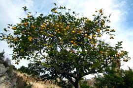 Aicq Sicilia e AgriFood 2019