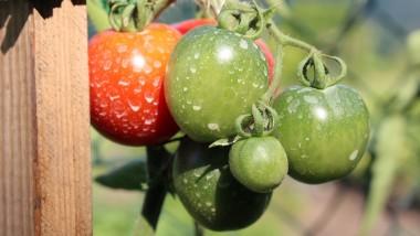 Sicurezza alimentare: più tutele per i consumatori