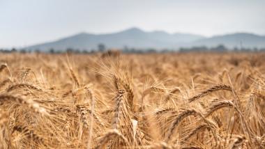 Al via Agrifood 2020